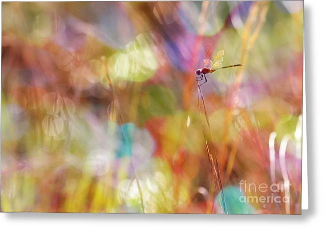 Sun Spots Greeting Cards - Morning Marsh Magic - Digital Art Greeting Card by Carol Groenen