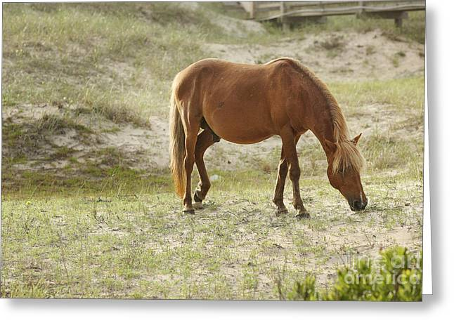 Equine Photo Greeting Cards - Morning Meal Greeting Card by Lyndsey Warren
