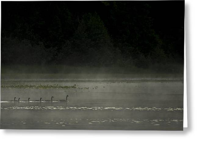 Ducklings Greeting Cards - Morning Mist Greeting Card by Aaron S Bedell
