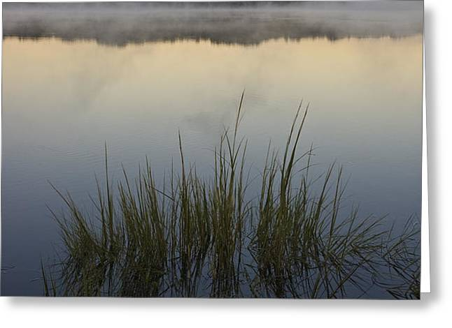 Morning Mist at Sunrise Greeting Card by David Gordon