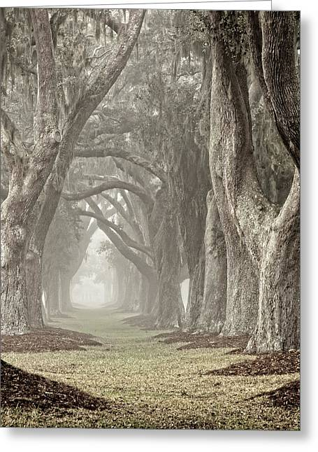 Recently Sold -  - Moss Greeting Cards - Morning Mist Avenue Greeting Card by Barbara Marie Kraus