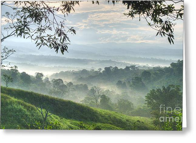 Grassland Greeting Cards - Morning Mist Greeting Card by Heiko Koehrer-Wagner