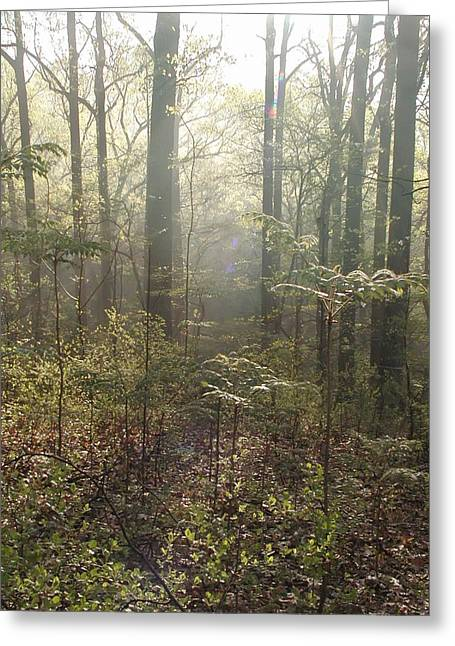 Morning Mist In The Forest Greeting Card by Bill Cannon