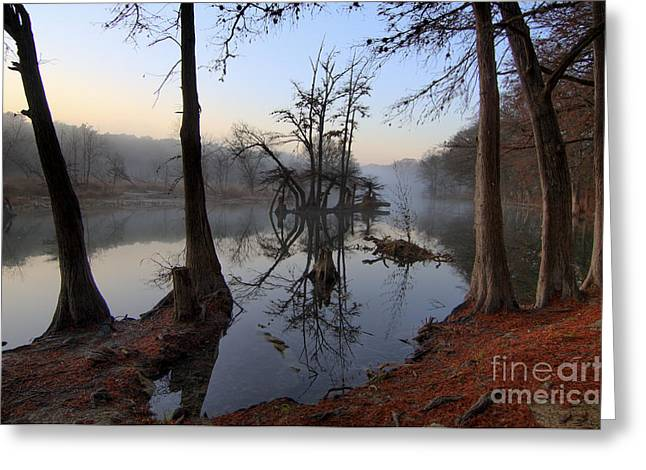 Wimberley Greeting Cards - Morning Mist on the Blanco Greeting Card by Richard Mason