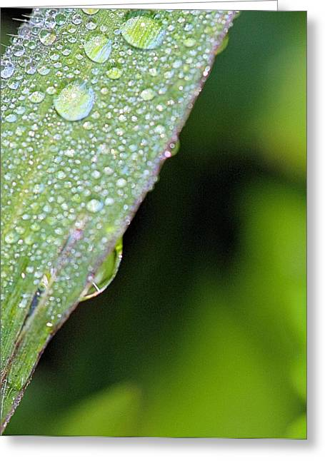 Morning Dew Greeting Cards - Morning Moisture Greeting Card by Dan Sproul