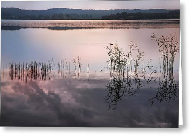 Nature Center Greeting Cards - Morning Nocturne. Ladoga Lake. Northern Russia  Greeting Card by Jenny Rainbow
