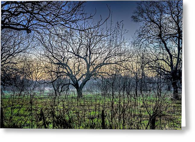 Barbed Wire Fences Greeting Cards - Morning of the Hunt Greeting Card by David Morefield