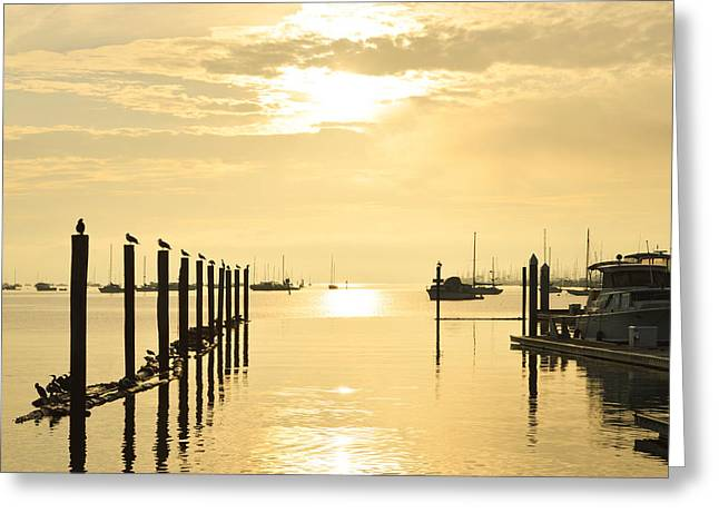 Sausalito Greeting Cards - Morning on the Bay Greeting Card by Maria Perry