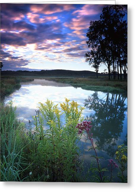 Hack-ma-tack National Wildlife Refuge Greeting Cards - Morning on the Creek Greeting Card by Ray Mathis
