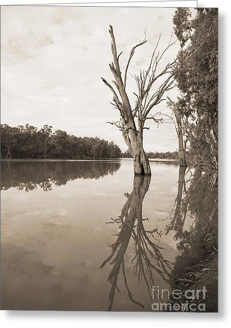 Reflecting Water Greeting Cards - Morning on the Murray Greeting Card by  Linda Lees