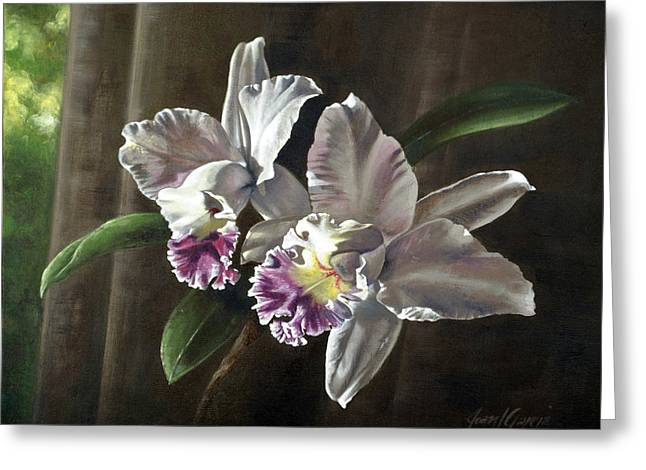 Cattleya Greeting Cards - Morning Orchids Greeting Card by Joan Garcia