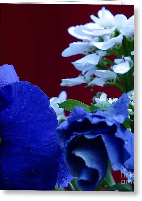 Randy Greeting Cards - Morning Pansy Greeting Card by Randy Jackson