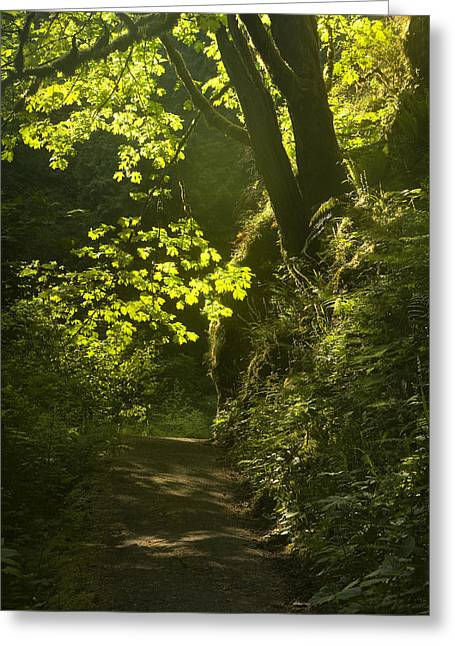 Path Greeting Cards - Morning Path Greeting Card by Andrew Soundarajan