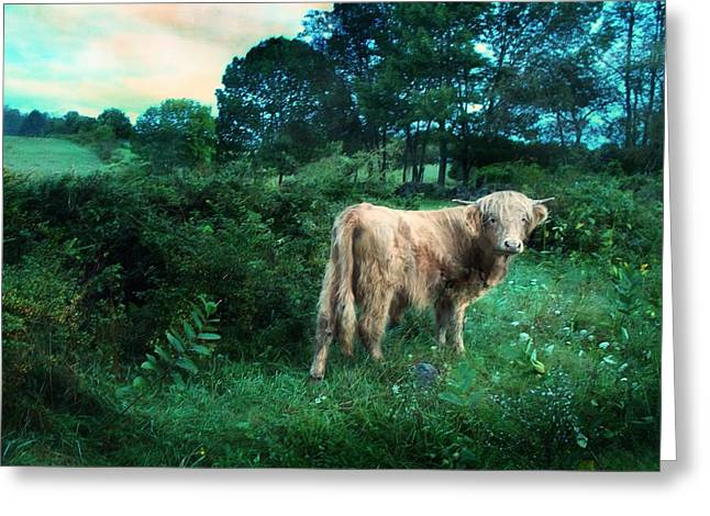 Maine Agriculture Digital Art Greeting Cards - Morning Portrait Greeting Card by Joy Nichols