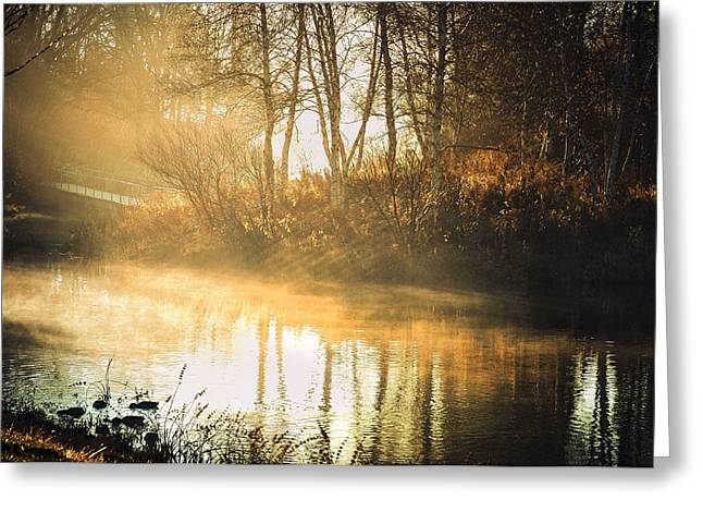 Autumn Scenes Greeting Cards - Morning Rays Greeting Card by Julie Palencia