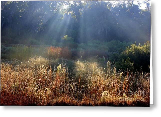 Morass Greeting Cards - Morning Rays through Live Oaks Greeting Card by Carol Groenen