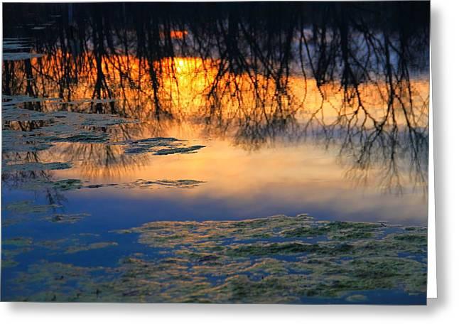 Alga Greeting Cards - Morning Reflections Greeting Card by Dan Sproul