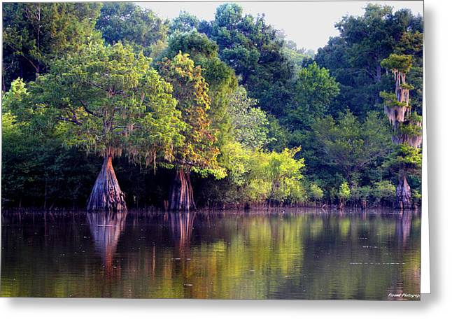 Reflections Of Trees In River Greeting Cards - Morning Reflections Greeting Card by Debra Forand