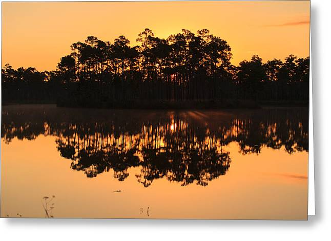 Everglades Greeting Cards - Morning Reflections Greeting Card by Jonathan Gewirtz