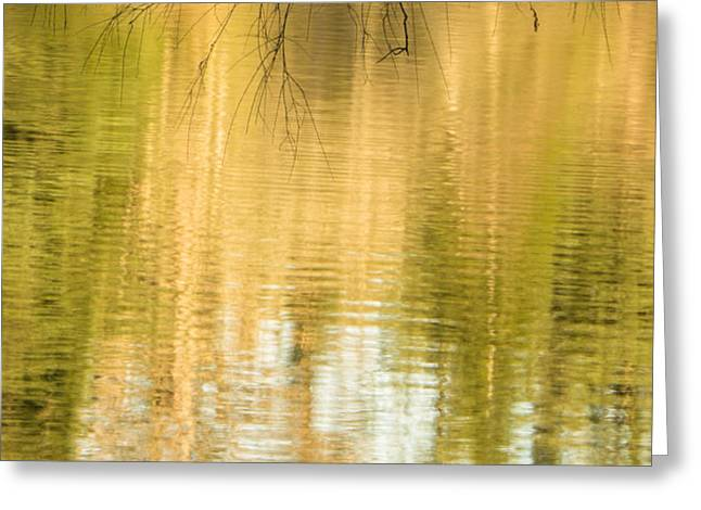 Smoothness Greeting Cards - Morning Reflections Greeting Card by Marilyn Wilson