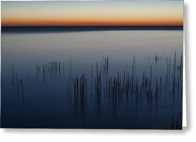 Morning Greeting Card by Scott Norris