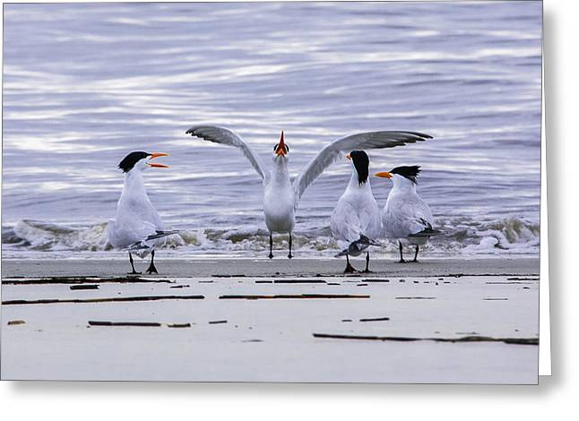 Tern Greeting Cards - Morning Serenade Greeting Card by Donna Macpherson