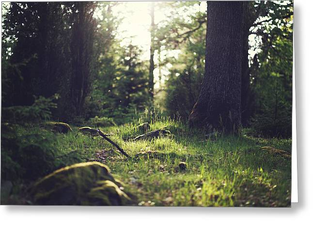 Ground Level Greeting Cards - Morning Serenity in the Forest Greeting Card by Mountain Dreams