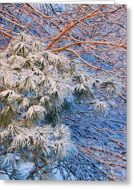 Snowstorm Prints Greeting Cards - Morning Snowfall  Greeting Card by Francie Davis