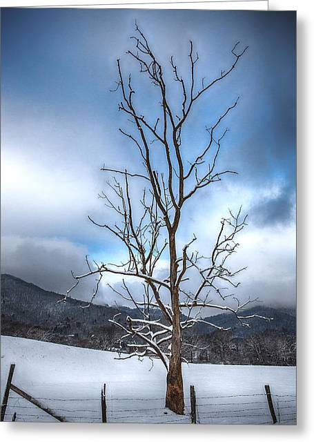 Snowstorm Greeting Cards - Morning Stand Greeting Card by John Haldane