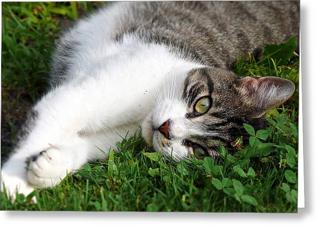House Cat Greeting Cards - Morning Stretch Greeting Card by Christina Rollo