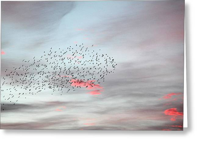Reflection Of Sun In Clouds Greeting Cards - Morning Stretch II Greeting Card by E Faithe Lester