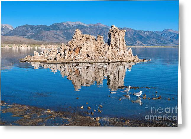 Calcium Greeting Cards - Morning Stroll - View with reflection of the strange Tufa Towers of Mono Lake. Greeting Card by Jamie Pham