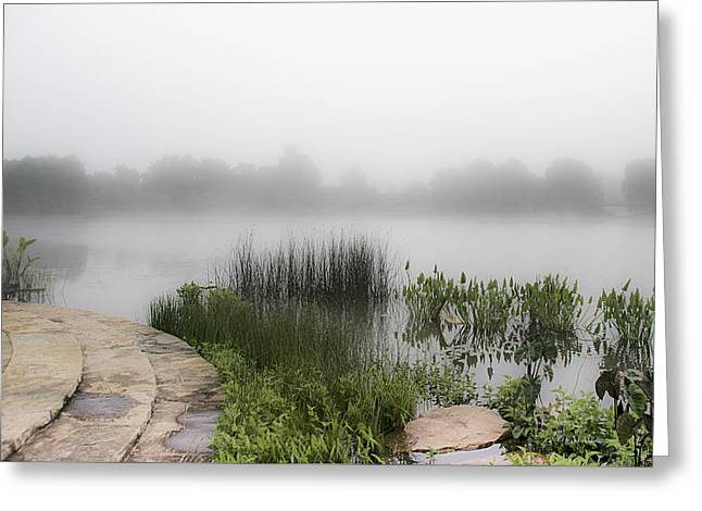 Julie Palencia Photography Greeting Cards - Morning Summer Mist Greeting Card by Julie Palencia