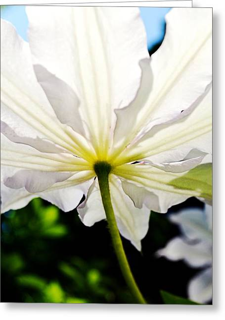 Stamen Digital Art Greeting Cards - Morning Sun Greeting Card by Michelle Calkins