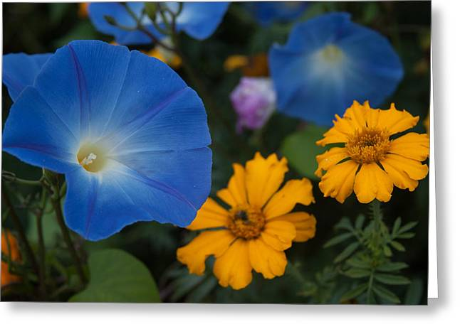 Image Of Morning Glory Greeting Cards - Morning sunny glory Greeting Card by Jeff Folger