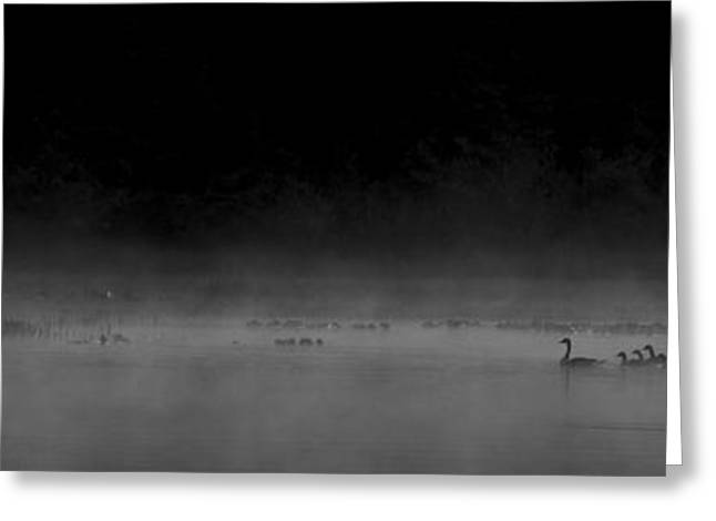 Ducklings Greeting Cards - Morning Swim bw Greeting Card by Aaron S Bedell