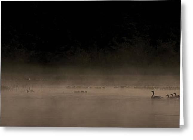 Ducklings Greeting Cards - Morning Swim sepia Greeting Card by Aaron S Bedell