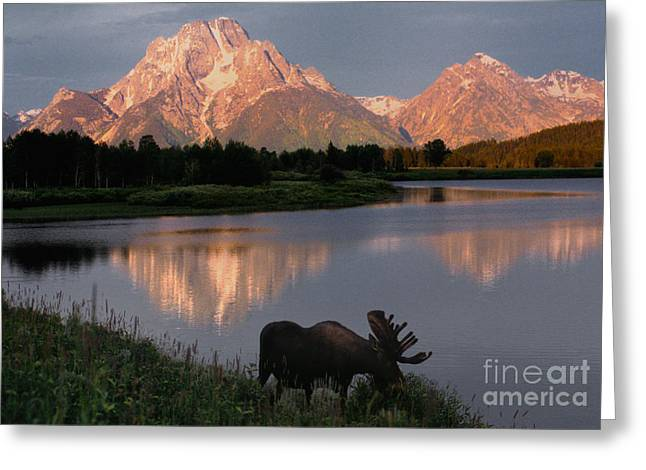 Mountains Greeting Cards - Morning Tranquility Greeting Card by Sandra Bronstein