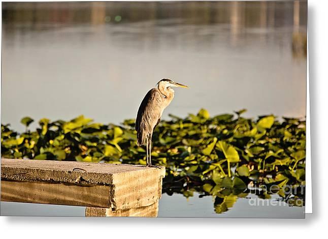Louisiana Sunrise Greeting Cards - Morning Watch Greeting Card by Scott Pellegrin