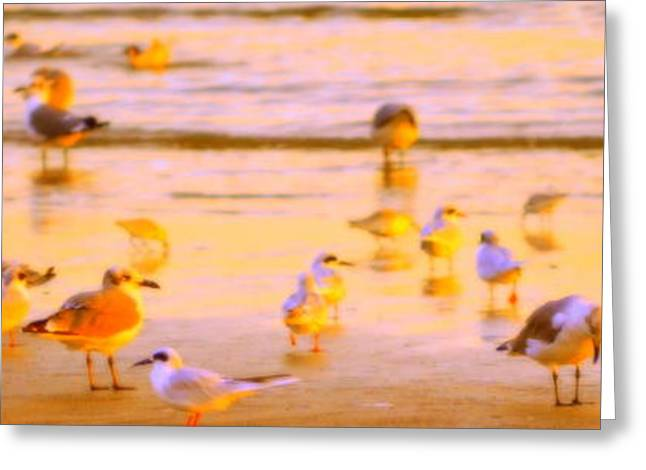 Tern Greeting Cards - Morning with the Seabirds Greeting Card by Deidra Smith