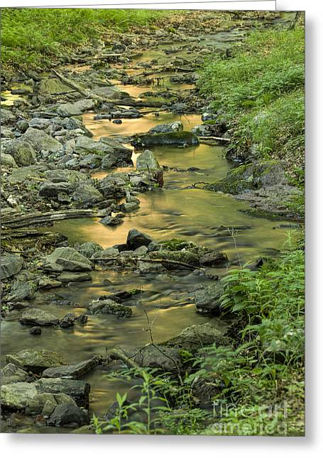Buttermilk Falls Greeting Cards - Mornings Reflection Greeting Card by Nicki McManus