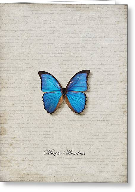 Danaus Genutia Greeting Cards - Morpho Menelaus Butterfly Greeting Card by Lee Craggs