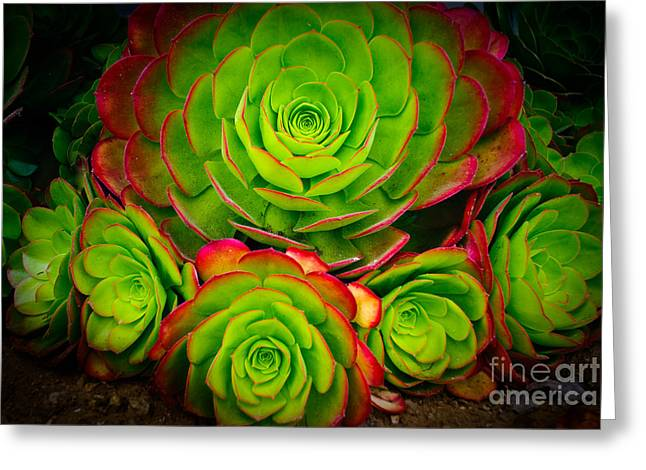 Terry Garvin Greeting Cards - Morro Bay Echeveria Greeting Card by Terry Garvin