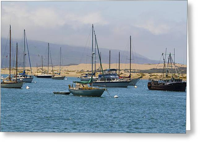 Morro Bay Harbor Greeting Card by Barbara Snyder