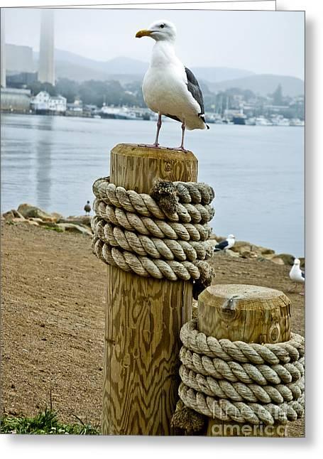 Pch Greeting Cards - Morro Bay of California 10 Greeting Card by Micah May