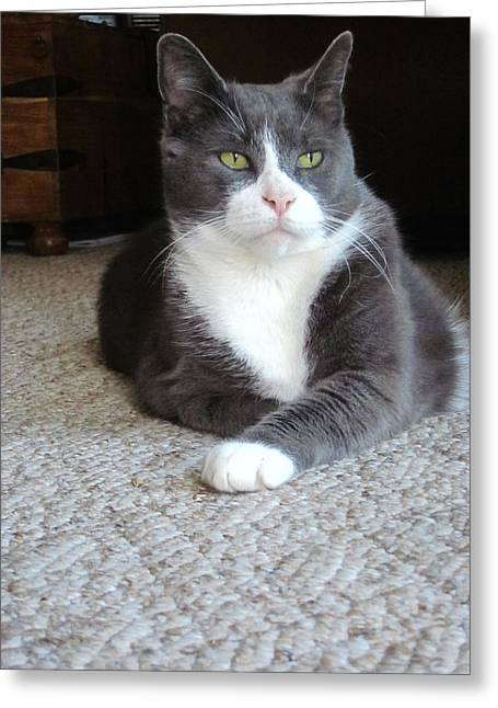 Guy Ricketts Photography Greeting Cards - Morty A Refined Gentleman Greeting Card by Guy Ricketts