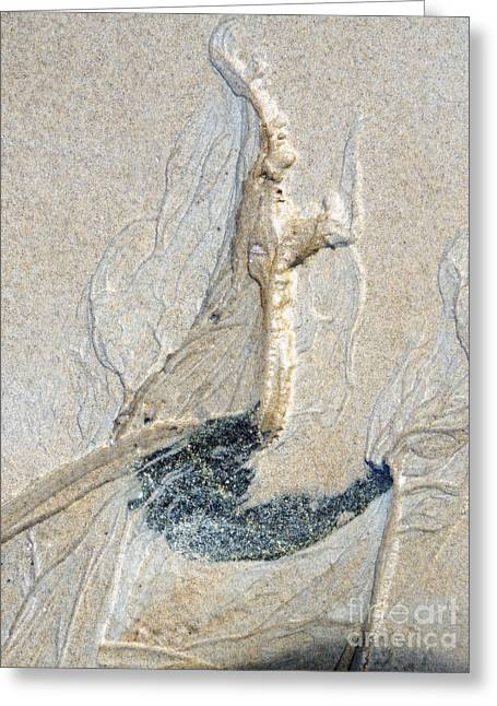 Sand Castles Greeting Cards - Mosquito 7 Greeting Card by Marcia Lee Jones