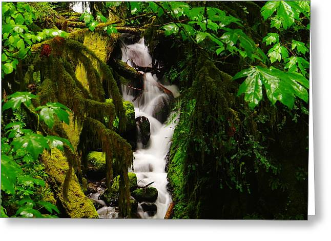 Water Flowing Greeting Cards - Moss And Water Greeting Card by Jeff  Swan