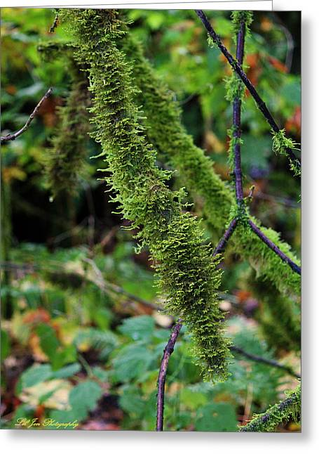 Moss Beauty Greeting Card by Jeanette C Landstrom
