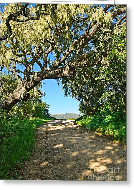 Epiphyte Greeting Cards - Moss covered tree in Garland Ranch Park in Monterey California. Greeting Card by Jamie Pham